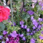 お花の集会