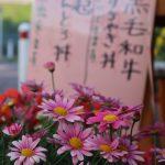すきやき丼・とんとろ丼とお花たち