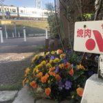 小田急線とお花たち